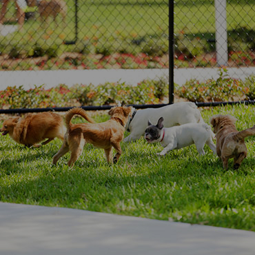 Large Dog Park at Fort Chaplin Park Apartments
